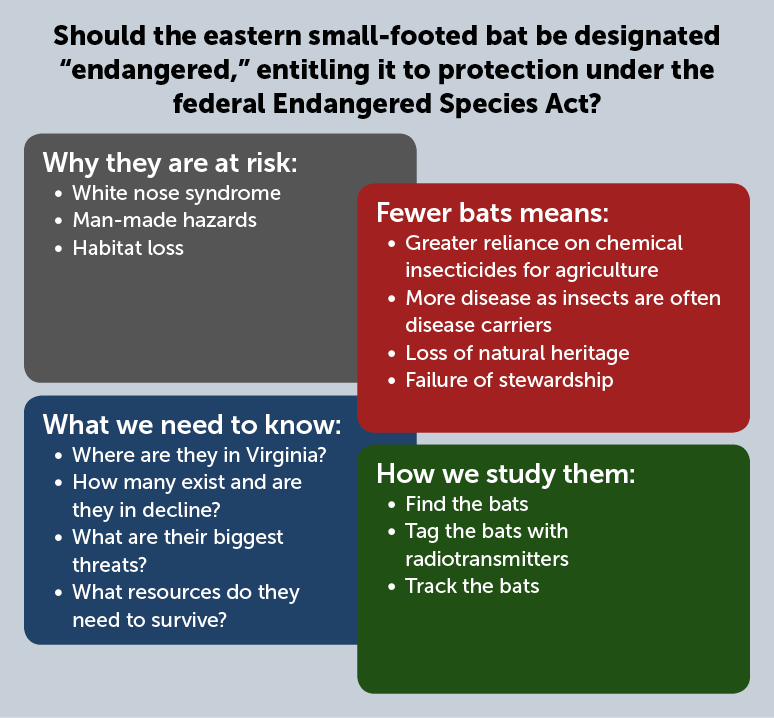This infographic shows why eastern small-footed bats are at risk and explores whether they should be listed as an endangered species. A smaller bat population results in rising insect populations, which impacts agriculture and the spread of disease.  White nose syndrome, man-made hazards, and habitat loss are reasons to study these bats.